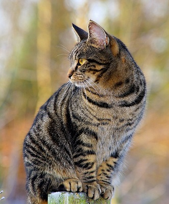 Characteristics of Domestic Cats