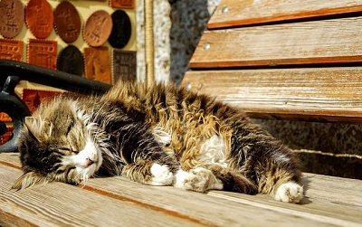 How to Help Cats Survive Summer Heat?