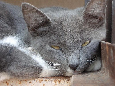 How to Tell If a Cat Is Sad or Depressed?