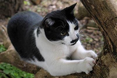 cat-2576794_640