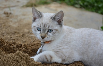 Cat not covering poop in litter box