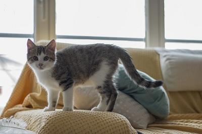 Do Indoor Cats Need Flea Treatment?