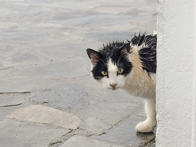 How to Take Feral Cat to Vet?