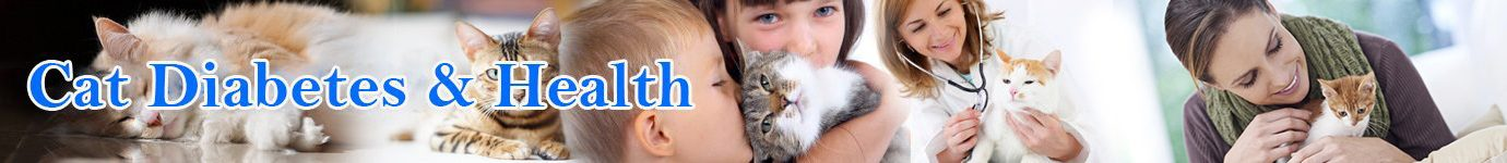 Cat Diabetes & Cat Care