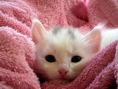 How to Care for Orphaned Kittens?