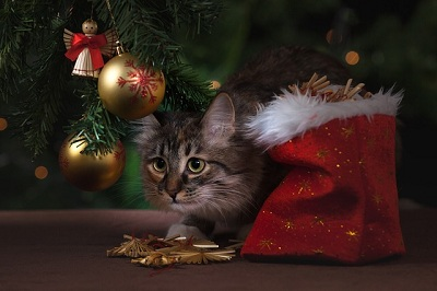 How to Save a Cat for New Year's Eve?