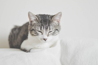 Why Do Cats Fold Their Paws In?