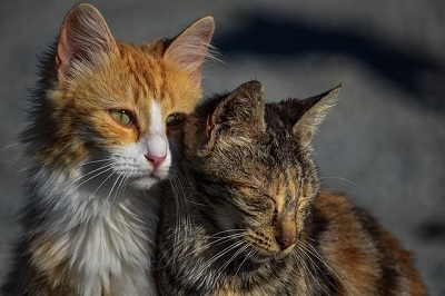 Things to Consider Before You Rehome a Cat