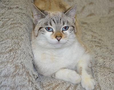 Risks of Adopting Mature Cat