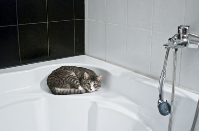 Why Do Cats Love Bathrooms?
