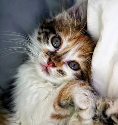 What Causes Swollen Eyes in Cats?