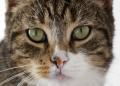 Top 5 Cat Symptoms