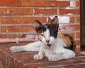 vomiting may be a symptom of cat diabetes