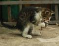 Raw Meat Diet For Cats