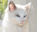 Blood Disorders in Cats
