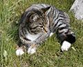 Cat WAnts A Midnight Binge
