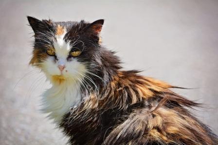 cat-758153_640