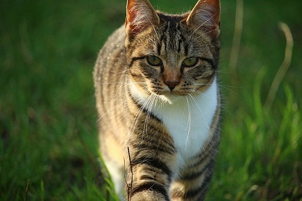 cat-1074981_640