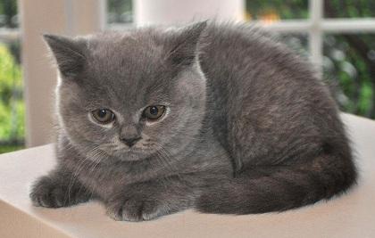 cat-1248019_640