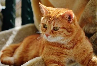 cat-1652840_640