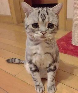 emotional cat